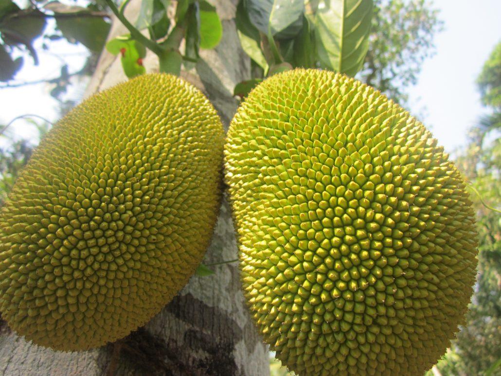Photo of Ripe jackfruit